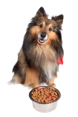 Pet Diets & Pet Products