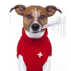 Veterinary Emergencies In Chelsea, London