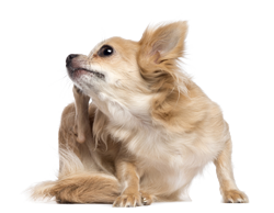 Flea & Tick Treatments From Vets In Chelsea