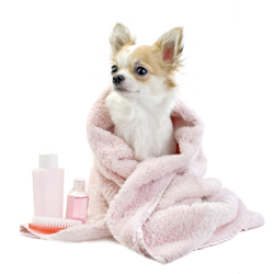 Dog Grooming In Chelsea - Brompton Vets
